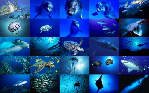 Sea Life wallpaper entitled Sea Life