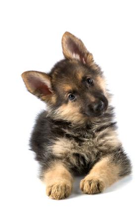 Tigger-ain't he cute?