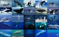 Whale - sea-life wallpaper