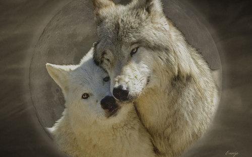 Wolf-Love