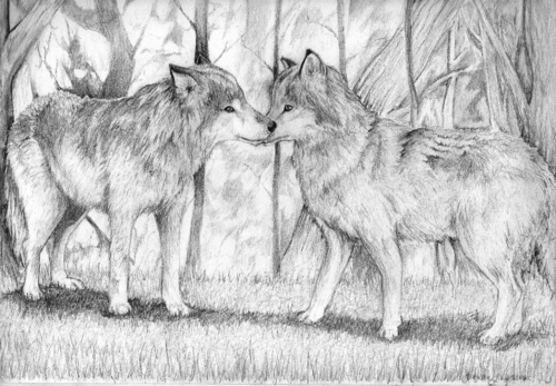 Wonderful Wolves