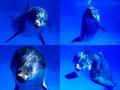 ikan lumba-lumba, lumba-lumba