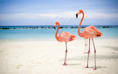 my kegemaran Flamingo.