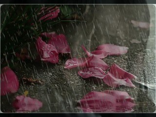 'rain and roses' simple and elegant images of TVD