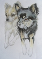 A Lovely Drawing of Chihuahuas - teddybear64 fan art