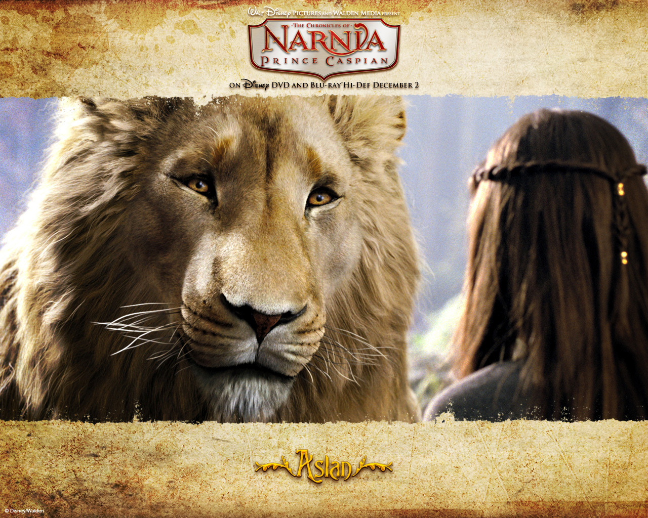 Aslan images Aslan HD wallpaper and background photos (18376539) for Narnia Aslan Wallpaper  165jwn