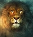 Aslan pic - aslan icon