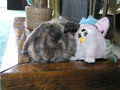 Best Buddies - furby photo