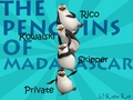 Custom Made Penguins of Madagascar Wallpaper - penguins-of-madagascar wallpaper