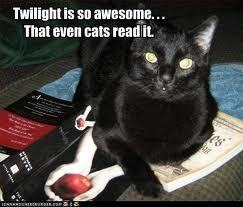 Critical Analysis of Twilight দেওয়ালপত্র possibly with a tom, a cat, and a kitten entitled Even the cat?