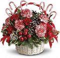Flowers amongst the pine - christmas photo