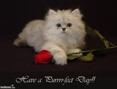 Have a purrfect دن Shirin :)