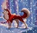 Jenna - balto photo