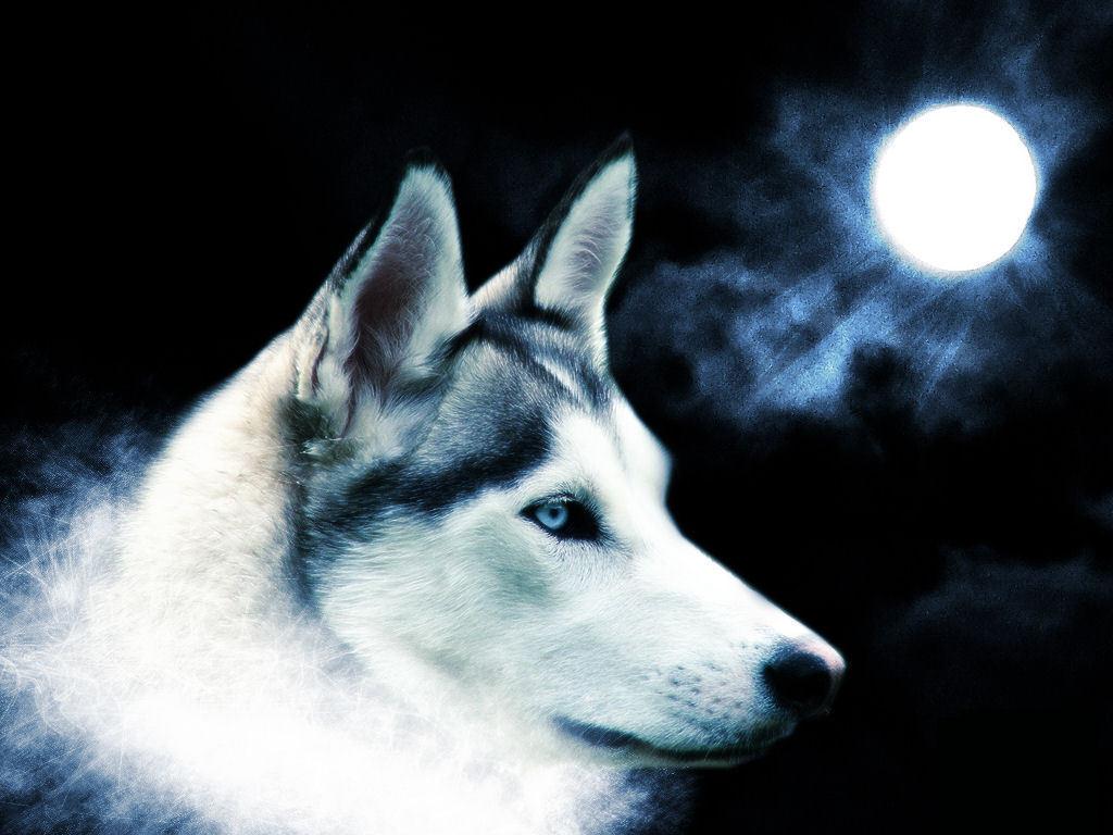 spirit animals wallpaper wolf - photo #13