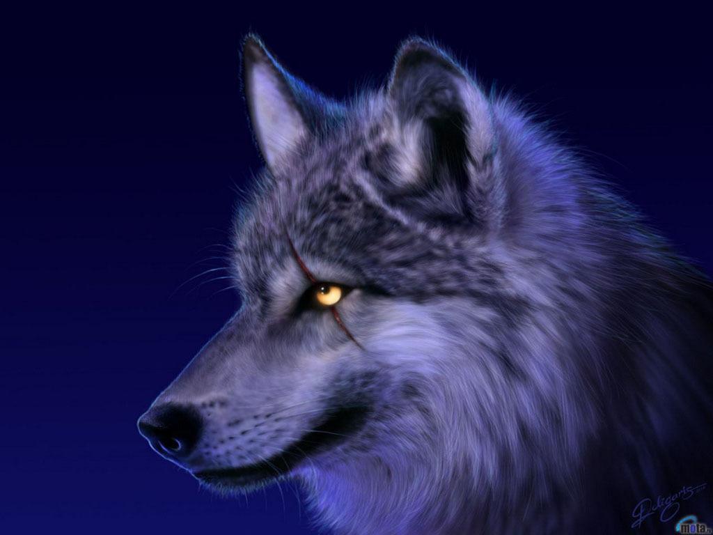 Spirit Of The Wolf Teddybear64 Wallpaper 18327158 Fanpop