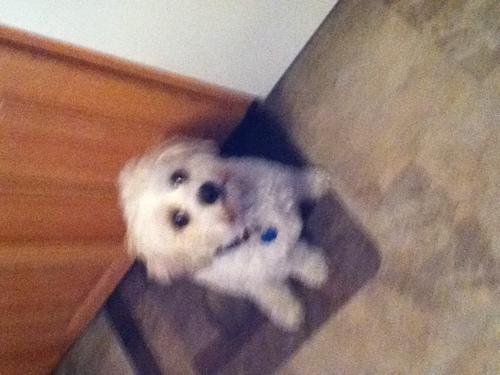 my puppyy