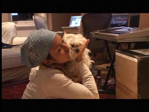 Shakira dog