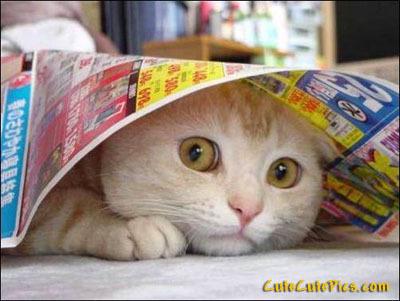 Adorable 小猫 <3