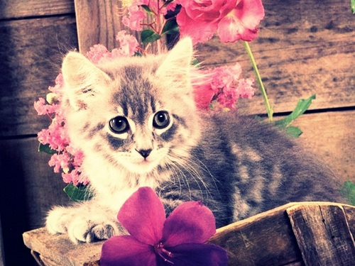 Cute kitten - cute-kittens Wallpaper