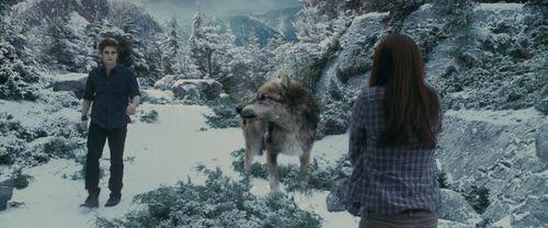 에드워드와 벨라 바탕화면 entitled Edward & Bella-Eclipse