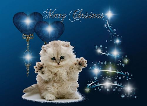 Kitten クリスマス