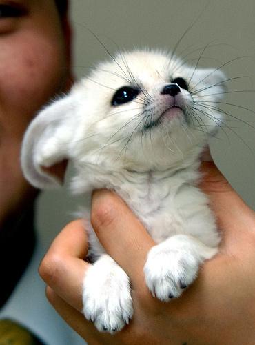 più baby animals! :D