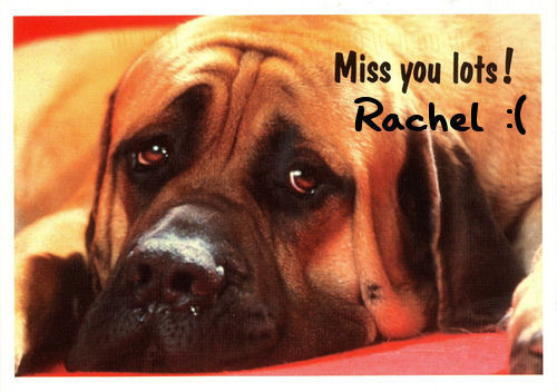 funkyrach01 wallpaper possibly with a bull mastiff and a mastiff titled Miss you lots Rachel :(