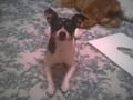 My Dog Wheezy - demon_wolf photo
