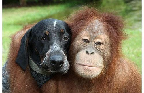 Unusual Friends <3