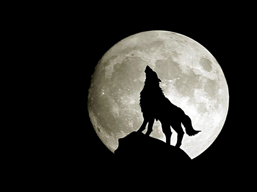 Wolves wallpaper probably with a percussion instrument and a sand dollar called Wolf