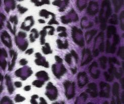 Zebra& Cheetah<3