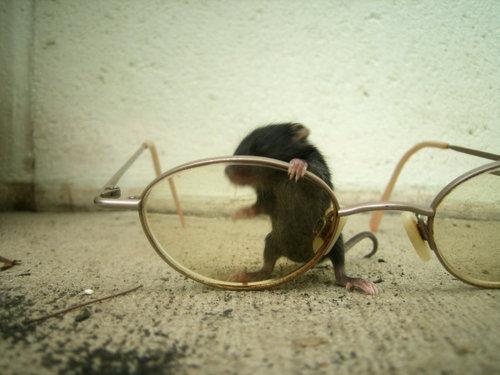 baby mice! :D