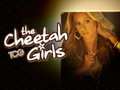 the-cheetah-girls - cheetah wallpaper