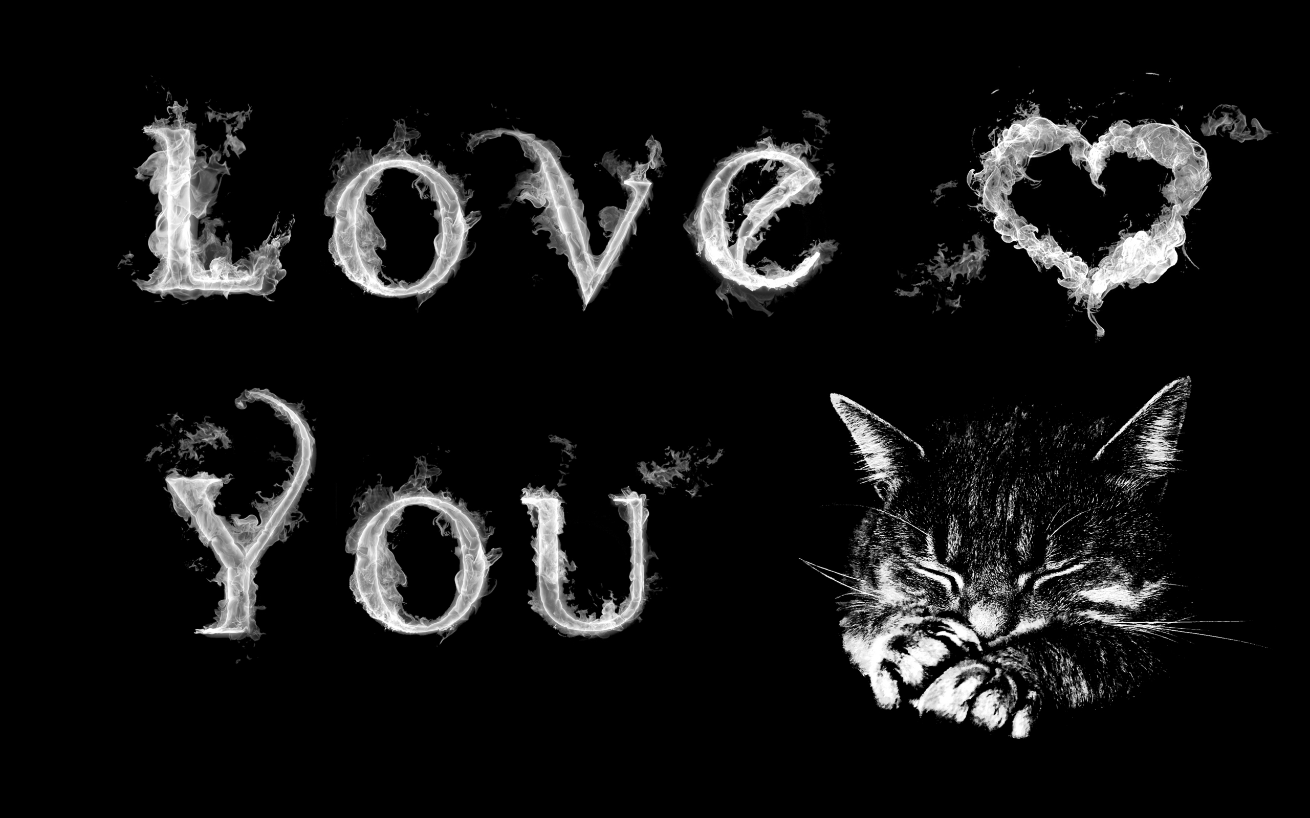kitten 爱情