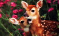 A Doe, A Deer - flora-and-fauna wallpaper