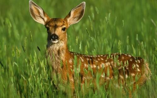 A Doe, A Deer