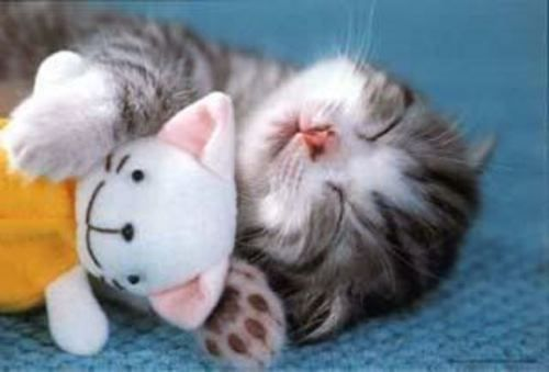 A cat sleeping with a toy(: