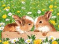 A little bunny wunny - flora-and-fauna wallpaper