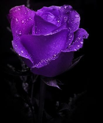 Beautiful Color roses images beautiful color wallpaper and background photos