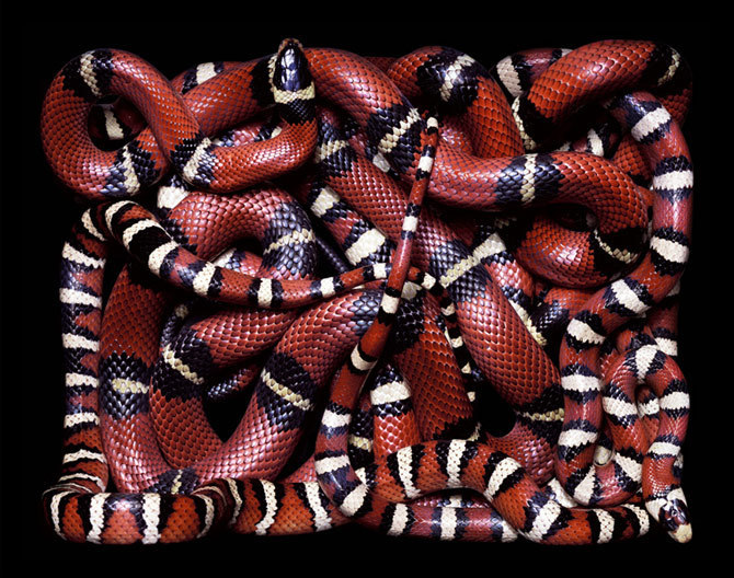 Snakes Images Beautiful Desings Wallpaper And Background Photos