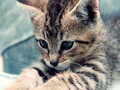cute-kittens - Cute kitten  wallpaper