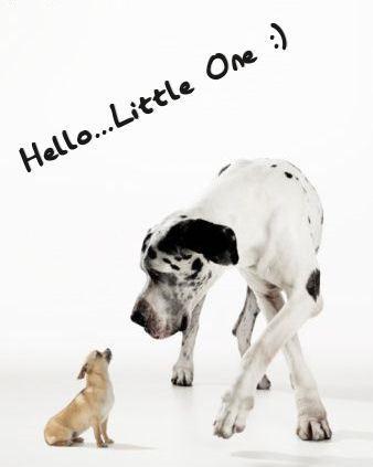 Hello...Little One :)