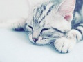 Kitten wallpaper <3 - cats wallpaper