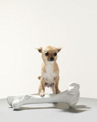 Little Dog....Big Bone :)