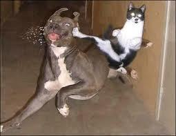 Ninja Kitty!!!