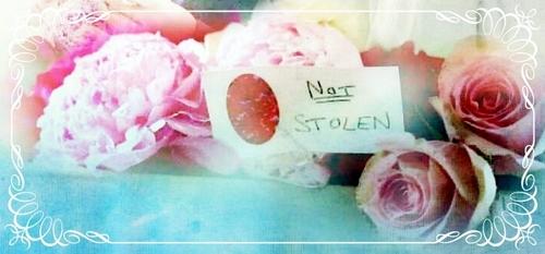 Not stolen 꽃