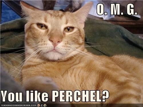 Percabeth cat is not amused.