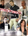 Prison Break - Season 5 - prison-break fan art