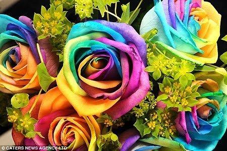 arco iris, arco-íris rosas