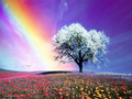 Rainbow - bright-colors wallpaper